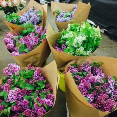 quinlan-wasserman-flowers